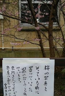 sakura(8).JPG